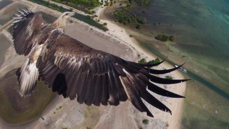 An eagle photographed by a drone. Earth Pics.