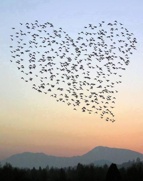 pássaros coração