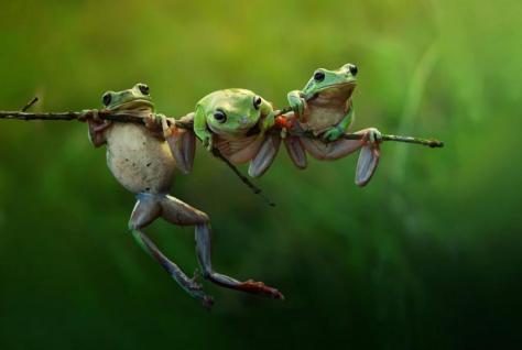 """Frog Story"" by Harfian Herdi — Nature & Wildlife, Open."