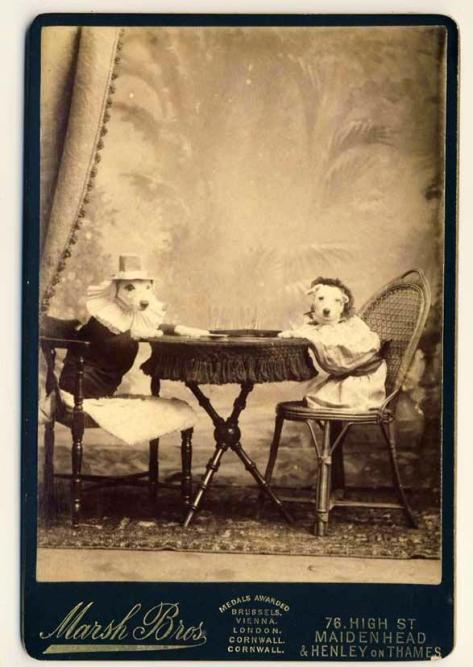 Dogs playing cards in 1891. Classic Pics.