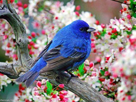 Blues entre flores