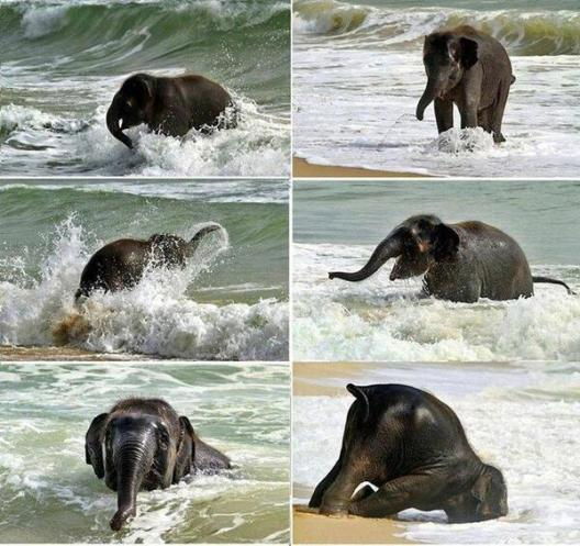 Baby elephant meets the sea for the first time. Fascinating Pictures.