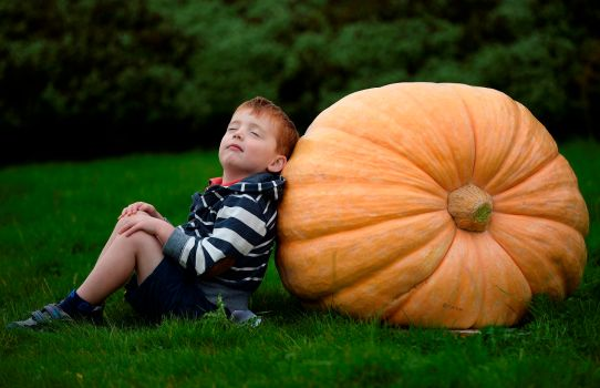 4 year old William Orton of Harrogate poses for photographs with a giant pumpkin during the first day at the Autumn flower show in Harrogate, northern England, September 13, 2013. The annual three day event features show gardens, flower displays, Giant vegetables, expert gardening and cooking advice and demonstrations REUTERS/Nigel Roddis (BRITAIN - Tags: SOCIETY ENVIRONMENT) - RTX13JQ2