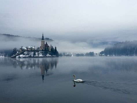 swan-lake-bled_92124_990x742