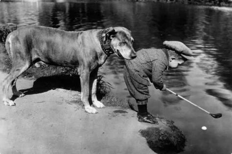A dog holds onto a little boy as he tries to retrieve a ball in a river with his golf club, 1920s. Historical Pics.