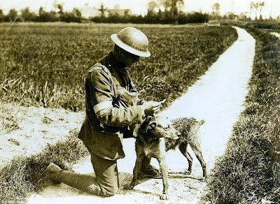 messenger-dog-1918-wwi-old-pics-archive