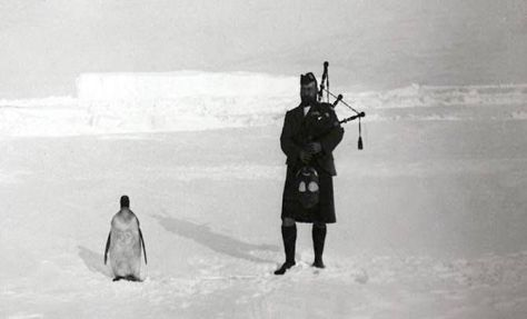 A member of the Scottish National Antarctic Expedition plays bagpipes for at penguin, 1904. Old Pics Archive.