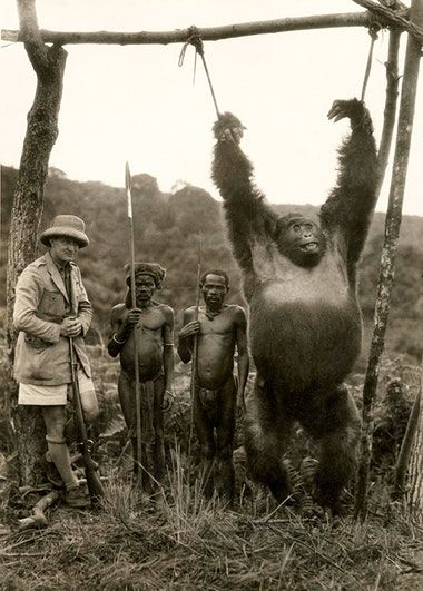 The Italian explorer Attilio Gatti with two pygmy servants and a gorilla they have captured. Belgian Congo, 1930. Old Pics Archive.
