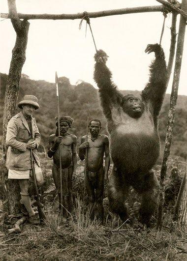 The Italian explorer Attilio Gatti with two pygmy servants and a gorilla they have captured. Belgian Congo, 1930. Old Pics Archive.