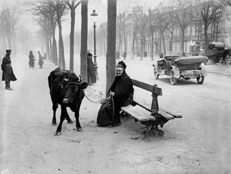 An old woman who fled the warzone with her cow, sits on a bench in Amiens, France, 28th March 1918. Mood Vintage.